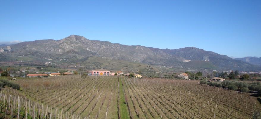 Marco De Grazia: la rivoluzione del vino sull'Etna