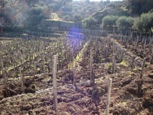 Terrazzamenti di vigne sull'Etna
