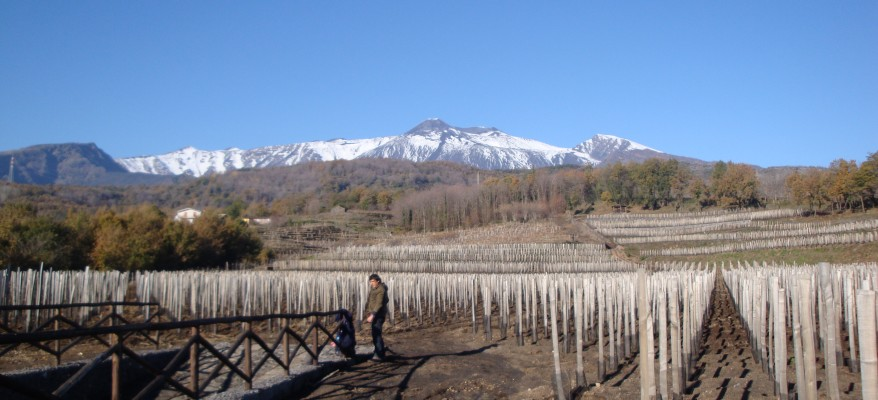 """Salvo Foti, profeta del vino dell'Etna: """"Il mio mestiere è coltivare uomini"""""""