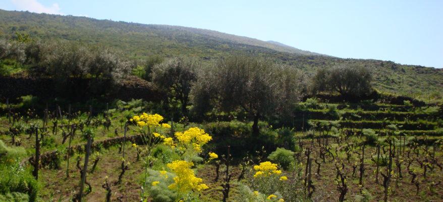 Vini Pietradolce: l'eleganza della donna-vulcano