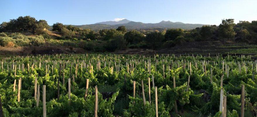 Benanti: quelli che 'inventarono' il vino sull'Etna