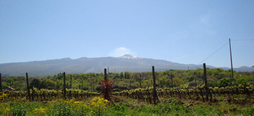 Giuseppe Russo, il musicista che sussurra alle vigne dell'Etna