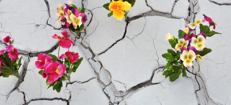 Dopo il terremoto: il coraggio e la rinascita dei piccoli produttori