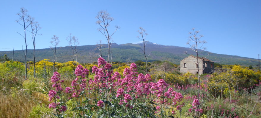 Cottanera: vini dell'Etna, bagnati dall'Alcantara