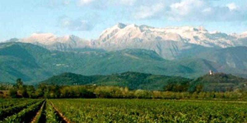 La Doc Friuli Venezia Giulia: prime bottiglie nel 2017