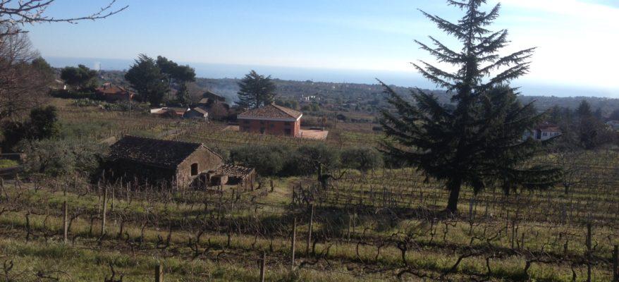I vini Costantino: quella linea rossa tra le lave