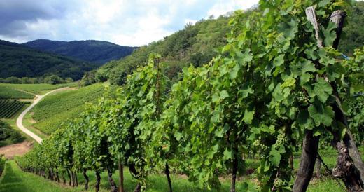 Vini della Valpolicella: è tempo di un Ripasso
