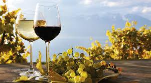 Bio o vegano? Il vino italiano alla conquista del mondo