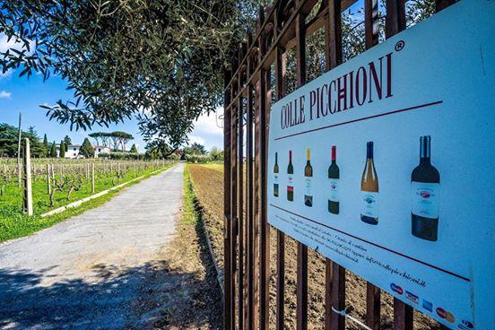 Colle Picchioni: vini con un'identità precisa