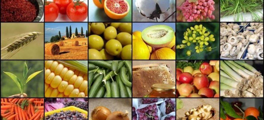 Ecco la mappa dell'agroalimentare: sul podio Sicilia e Puglia