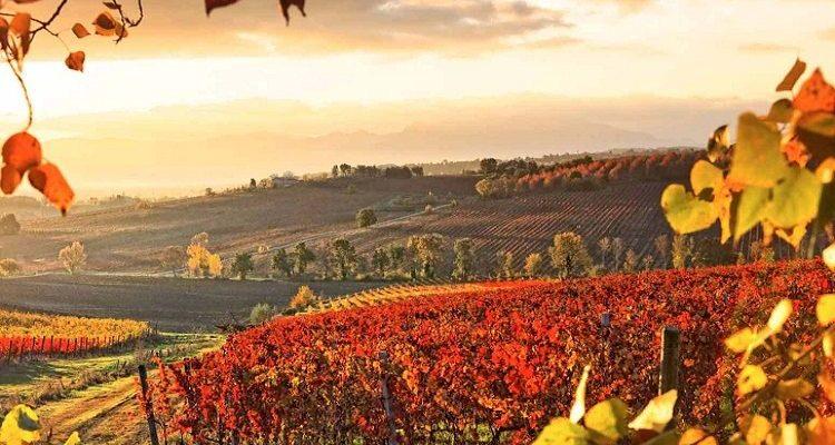 Terremoto: calici di solidarietà da Città del Vino