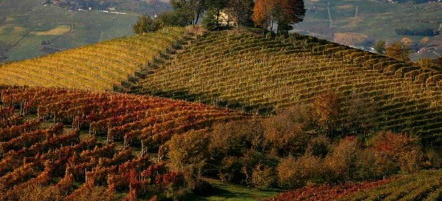 """""""Il paesaggio viticolo? E' patrimonio culturale"""". Lo dicono gli avvocati del vino"""