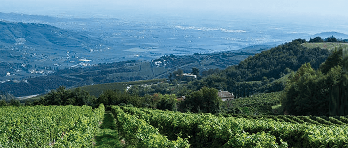 Giornata SalvaTerra: un Think Tank per il futuro del vino