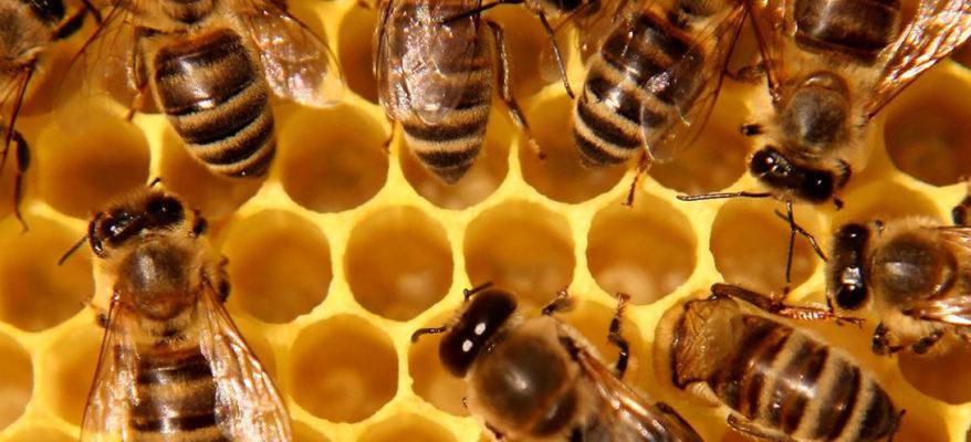 Il robot impollinatore che supplisce al declino api