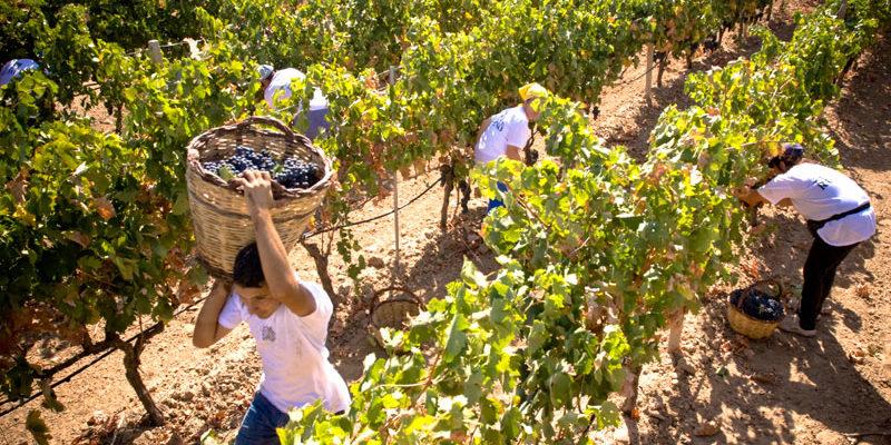 L'Italia prima al mondo nella produzione di vino