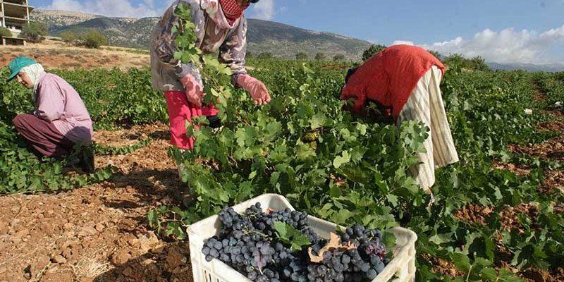 """Il """"miracolo"""" dei vini siriani"""