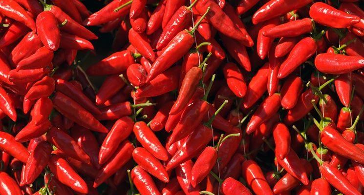 A Diamante il Peperoncino Festival: arte, cibo e vino in salsa piccante