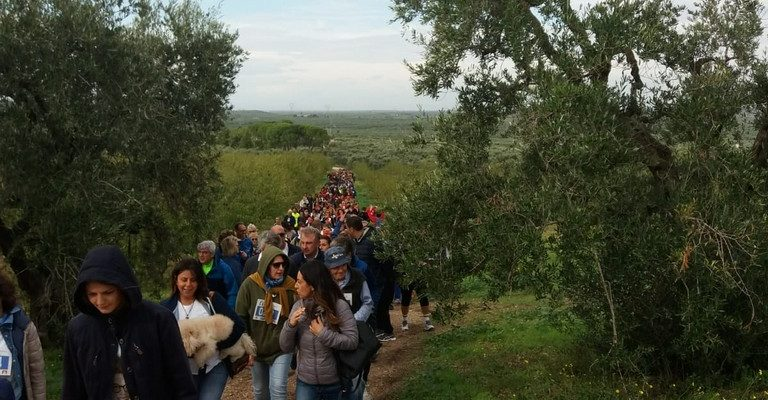 Camminata tra gli olivi, 124 le città partecipanti