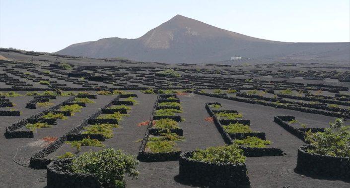 """I vigneti surreali di Lanzarote: un reportage… """"vulcanico"""""""