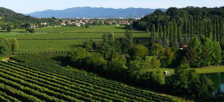 Attems dei Marchesi Frescobaldi: il prestigio dei vini del Collio