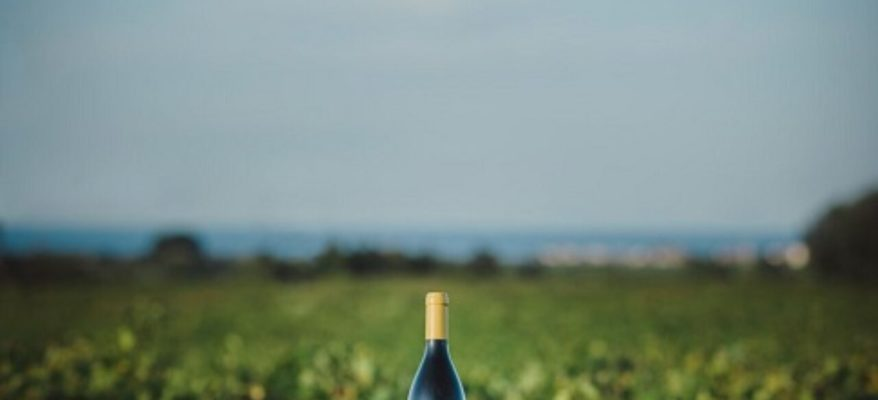 'Unsocials creative wines': vino e creatività di questi tempi
