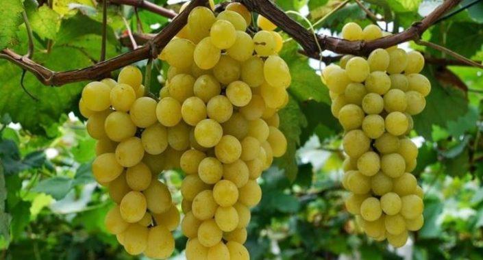 Moscato Wine Festival, il tour 2021 fa tappa a Roma
